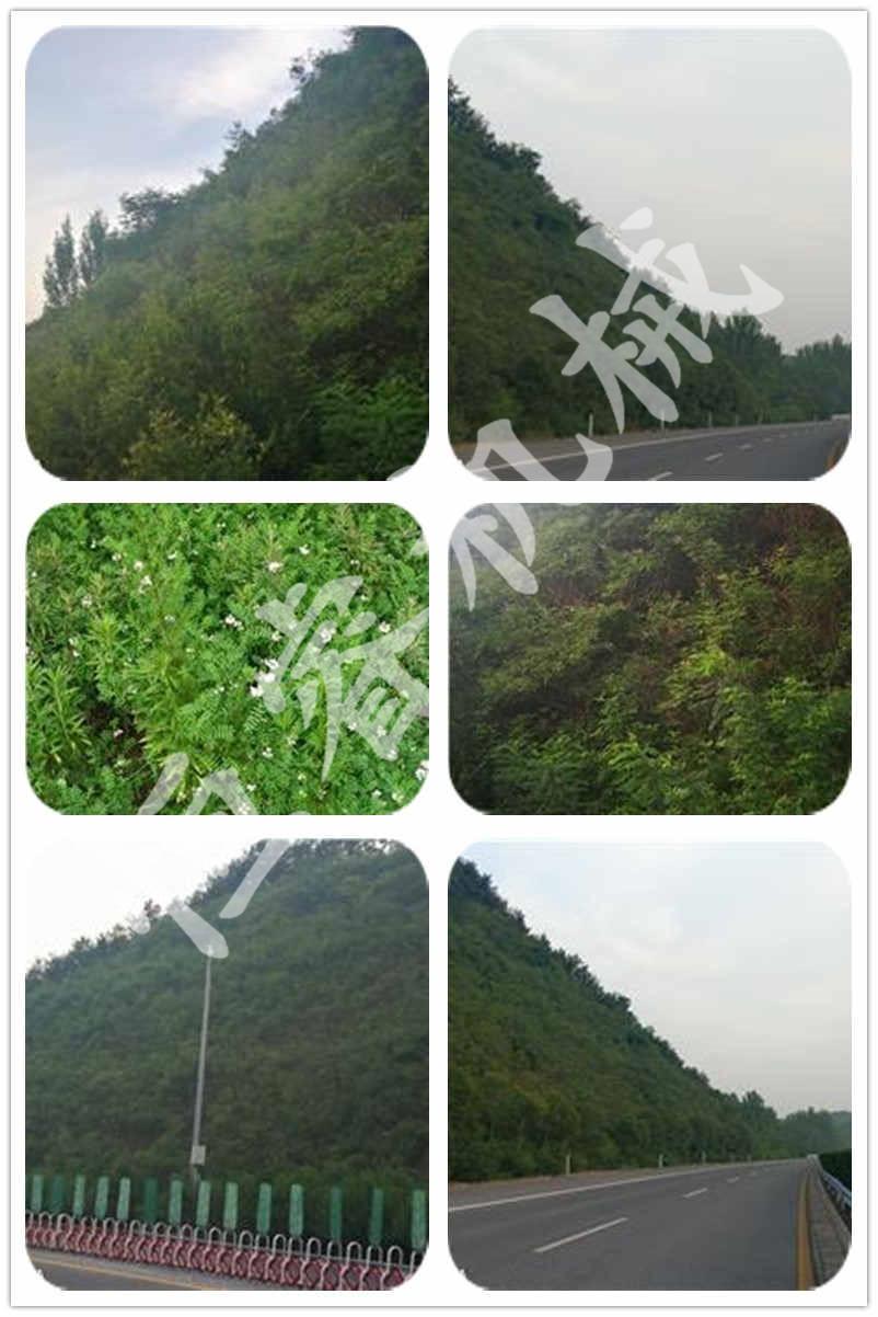 沪陕高速边坡绿化
